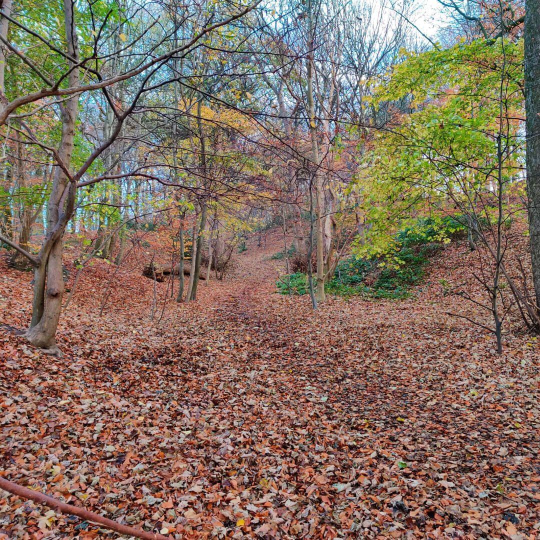 Autumn in Batcliffe Wood