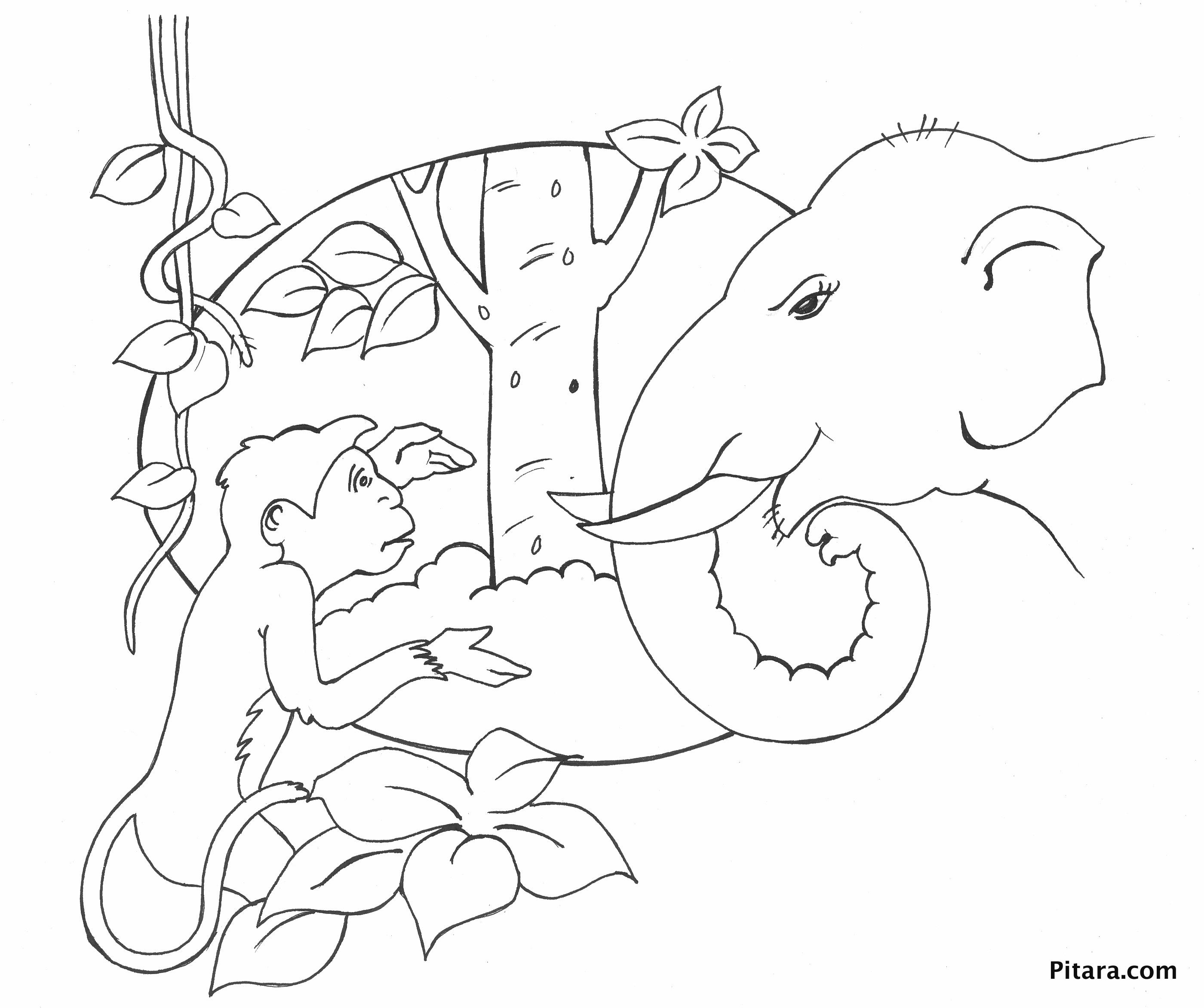 Monkey & elephant