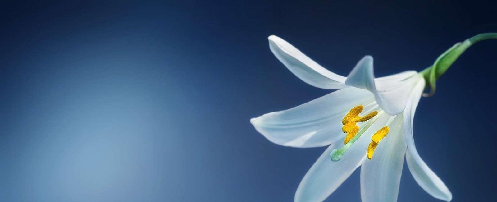 Top 10 cele mai scumpe flori din lume