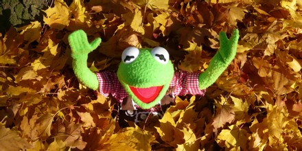 Kermit with hands up in leaves