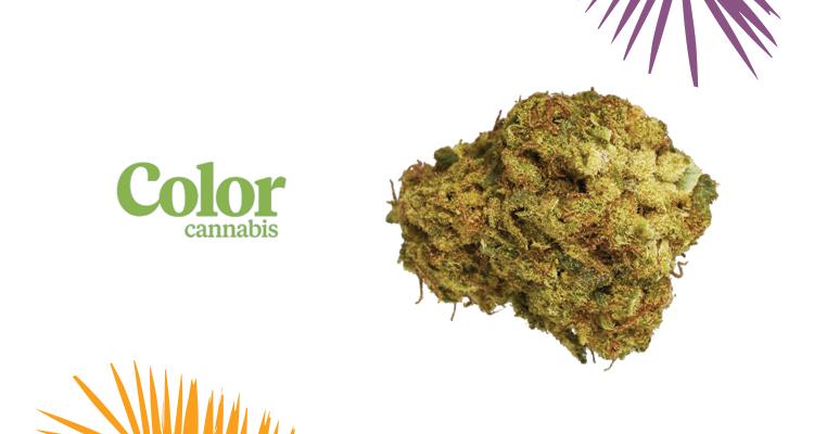 Color Cannabis – Pedro's Sweet Sativa Strain