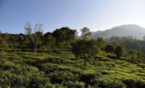 Vista Chiaro Plots | Kotagiri, Aravenu, Coonoor