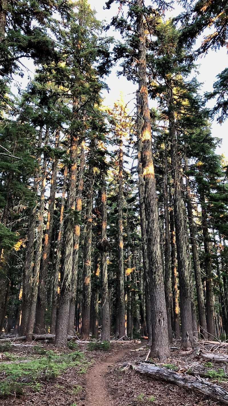 Sunlight-streaked trees