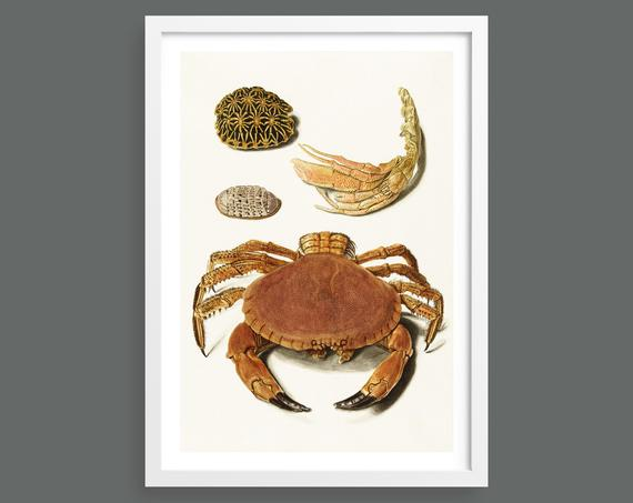 Crab and Turtle Shells