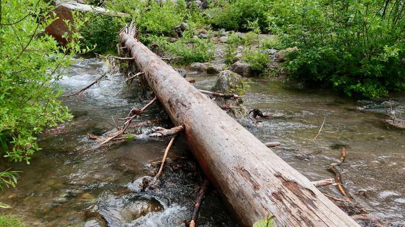 A log lying over Sitkum Creek