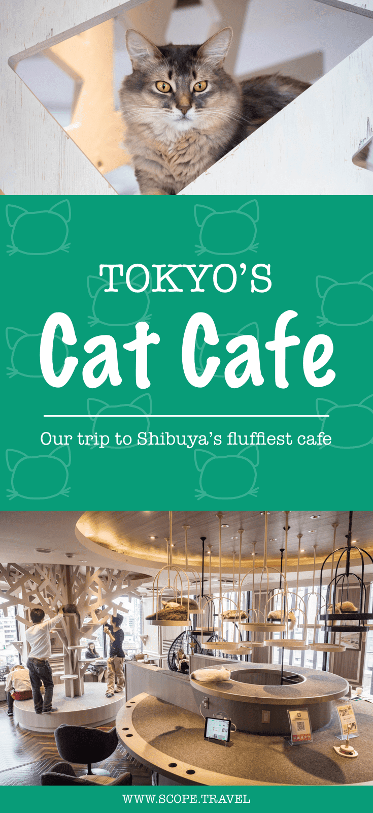 pinterest tokyo japan cat cafe