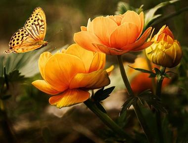 Curiozitati despre flori