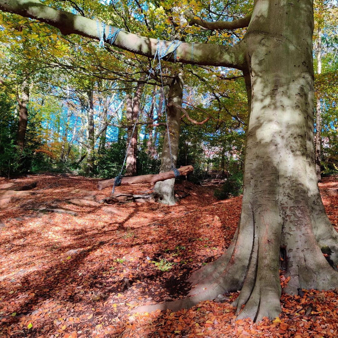 Gledhow Valley Woods in Autumn by rope swing