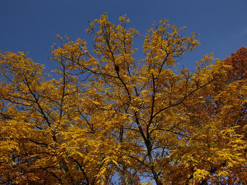 Осеннее прогулочное