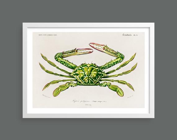Crab vintage print