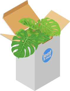Plant delivery in a box