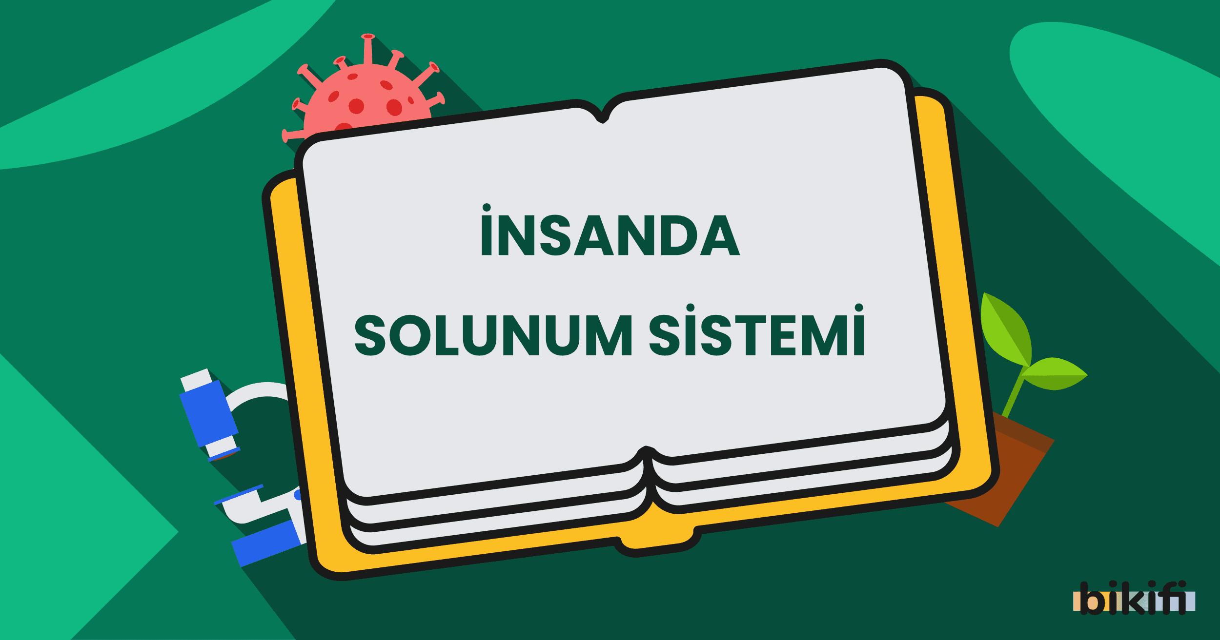 İnsanlarda Solunum Sistemi
