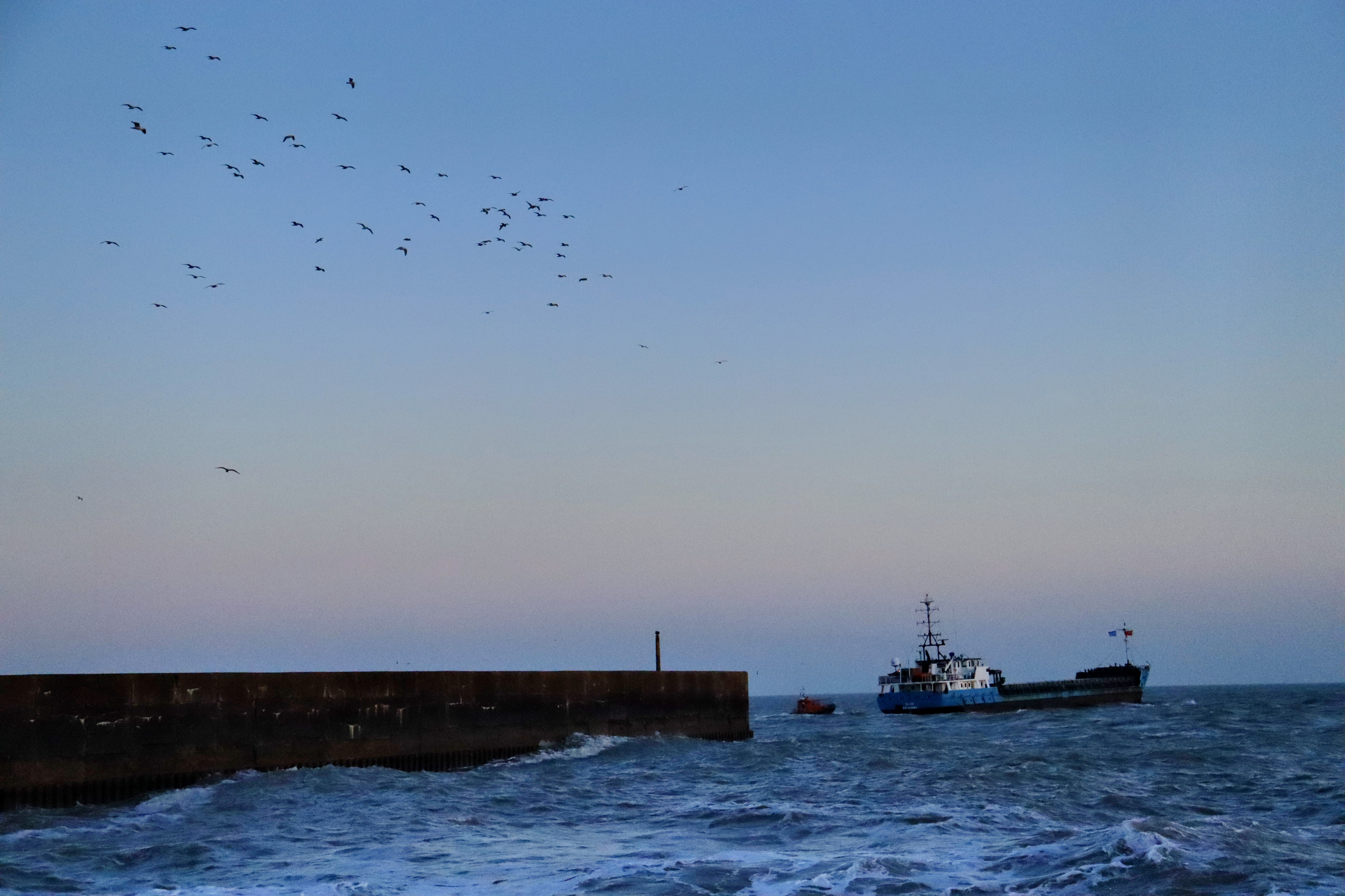 Cargo boat escorted out of a harbour by a smaller pilot boat. Seagulls circle above the harbour wall in the left of the photo.