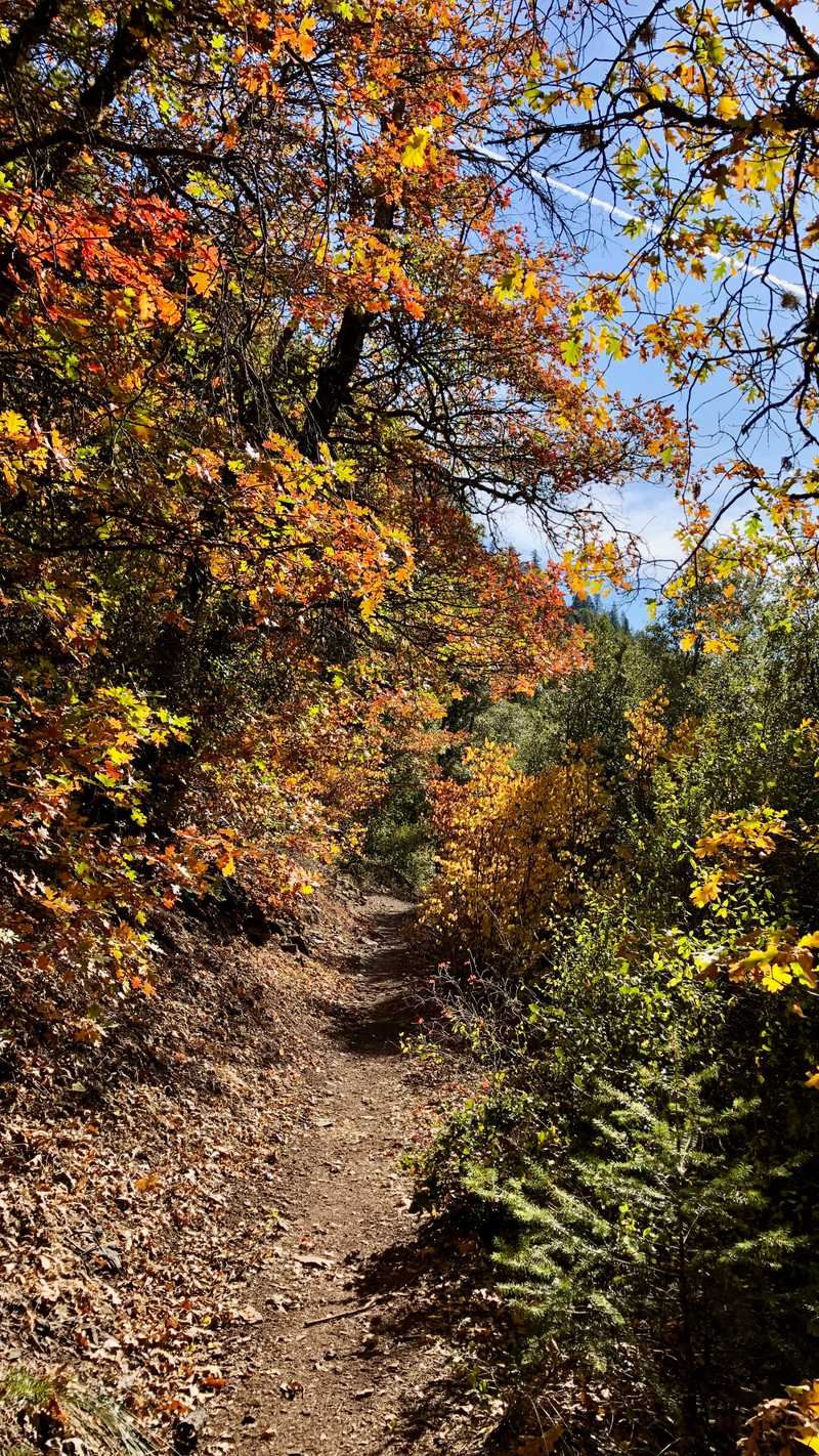 The trail climbs after Centipede Gulch