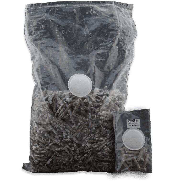 Plud spawn in bags   MycoLabs
