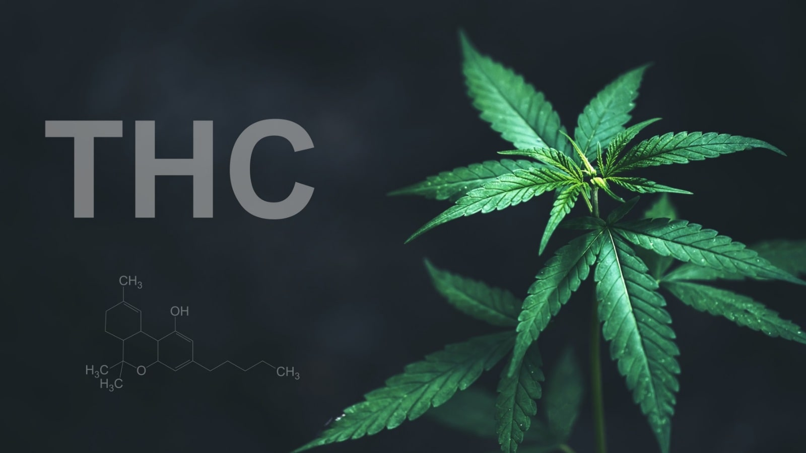What is THC: Benefits & Side Effects