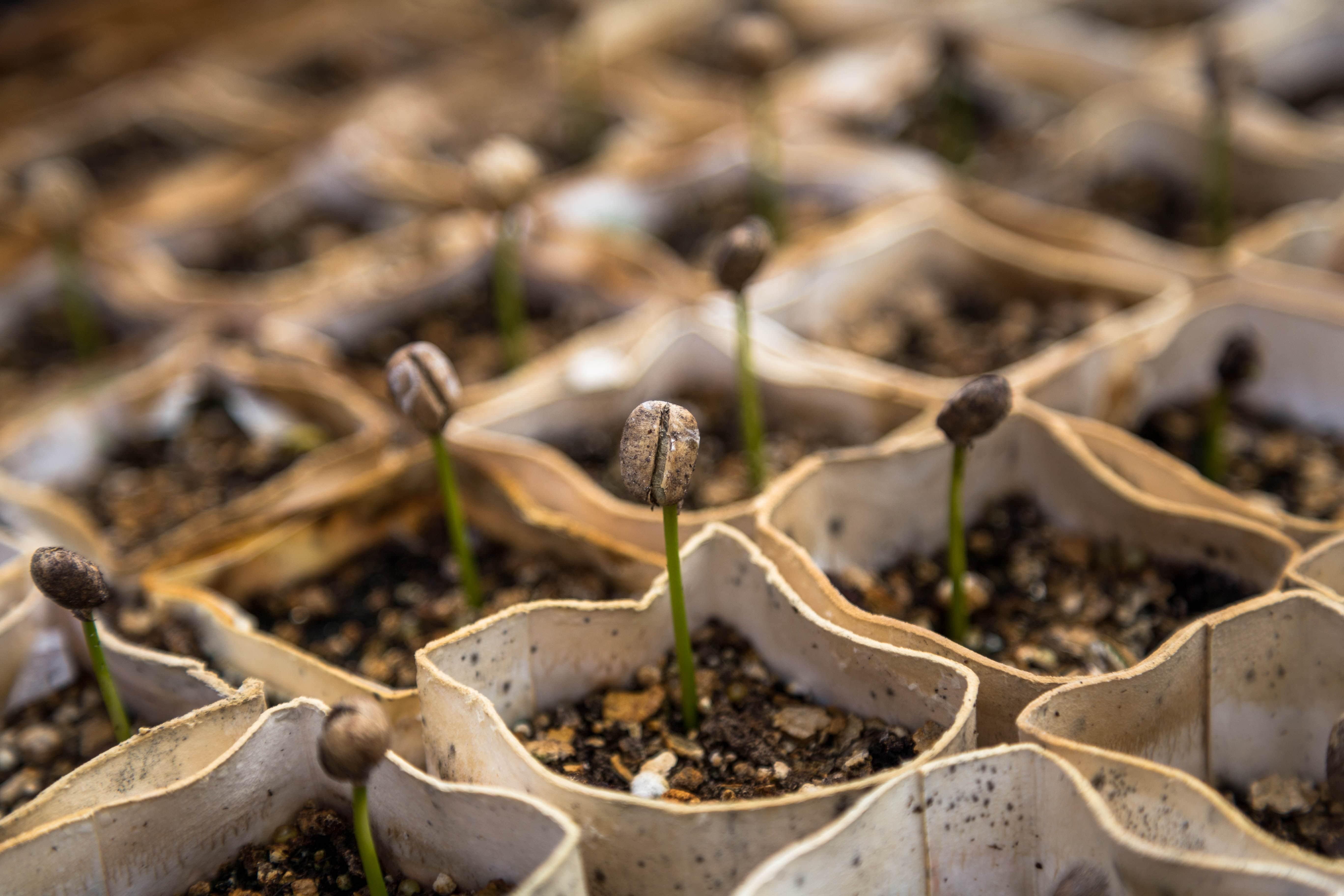 Imagem de plantas nascendo