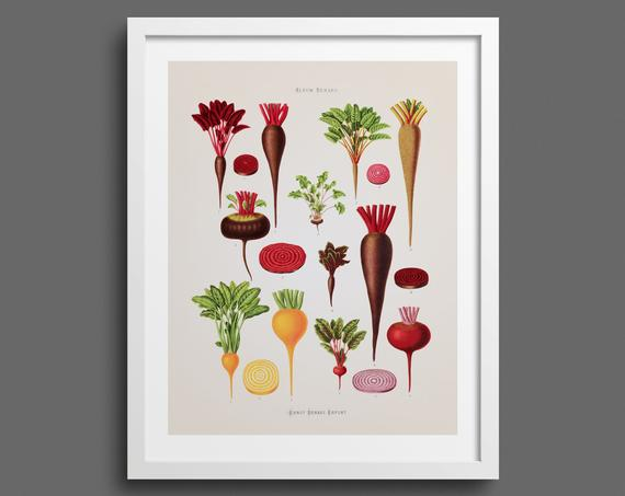 Root Vegetables and Beetroots