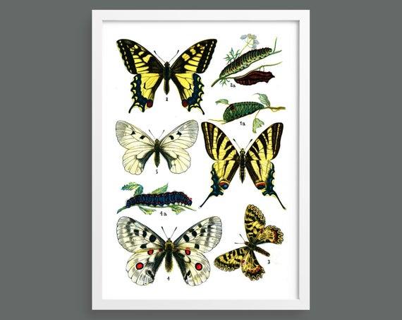 Botanical butterfly print