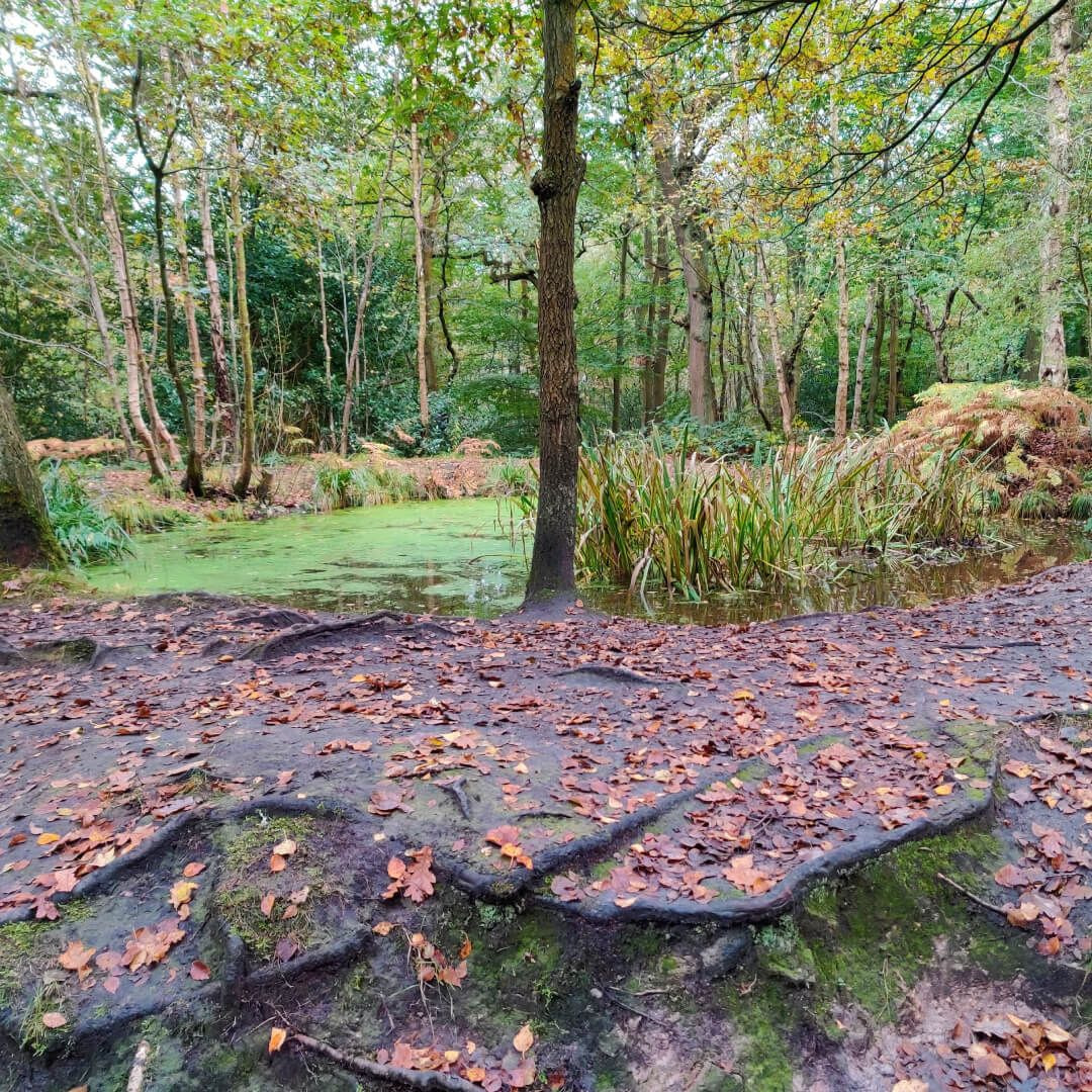 Adel Woods small pond
