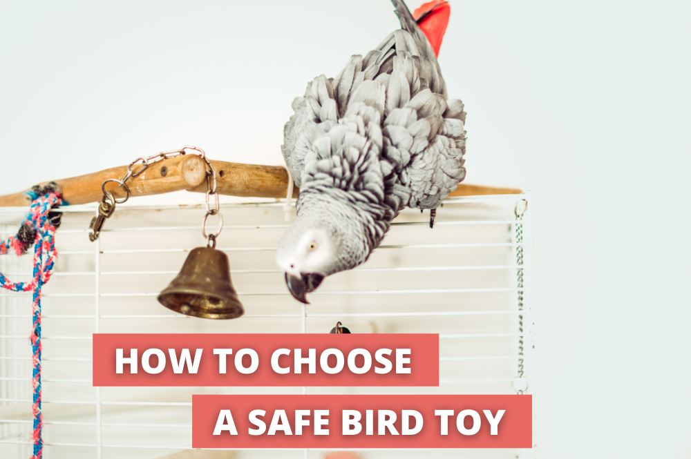 African Grey playing with the bell. The title is how to choose a safe bird toy.