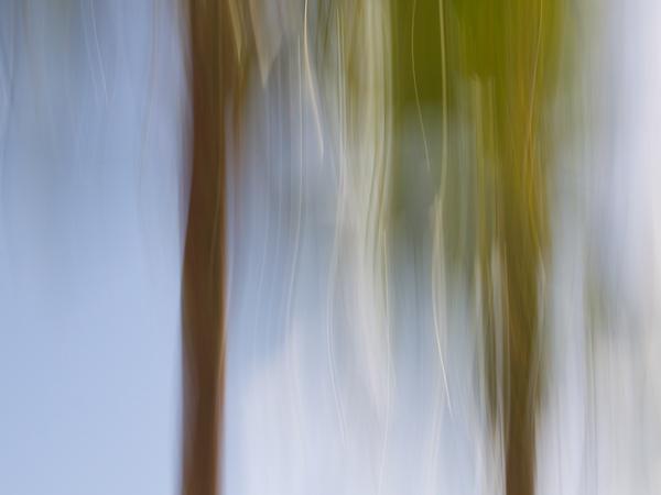 Pool Palms #2549