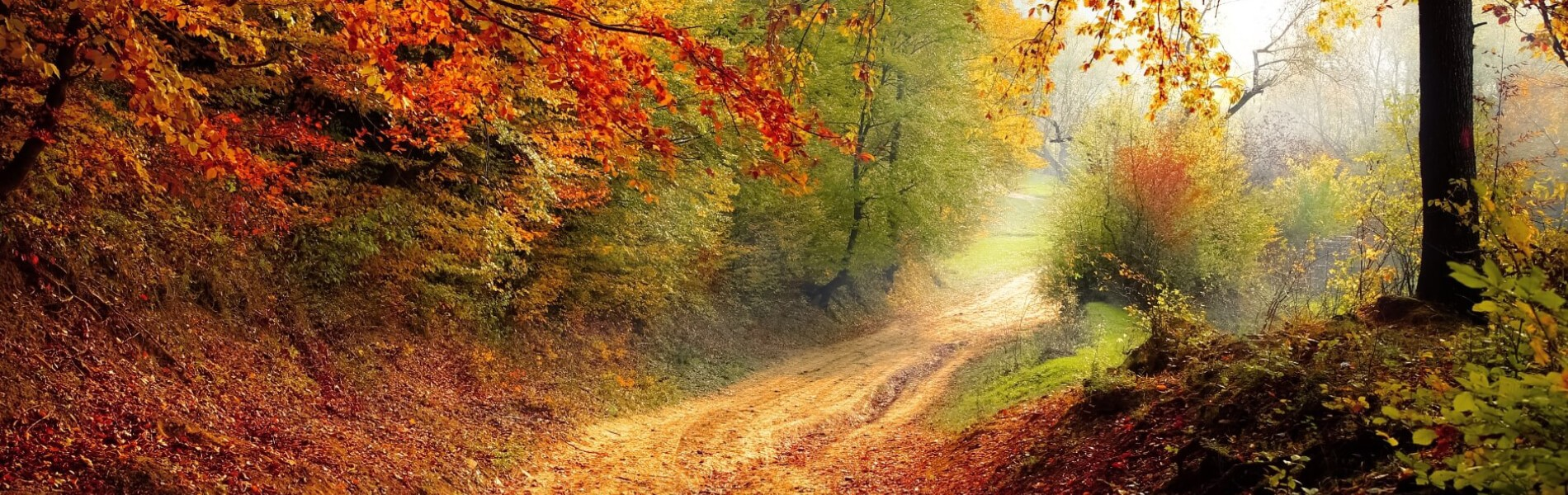 Path through woods in Autumn