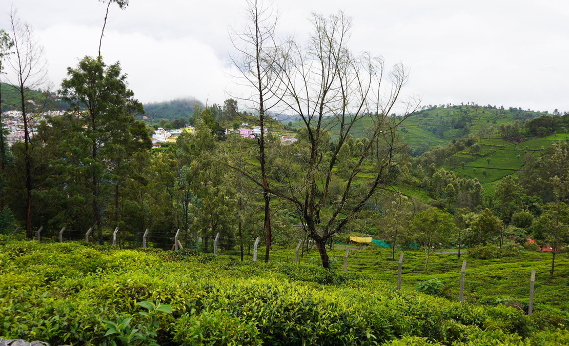 View of a plot from Hillsdale, Yedapalli, Coonoor