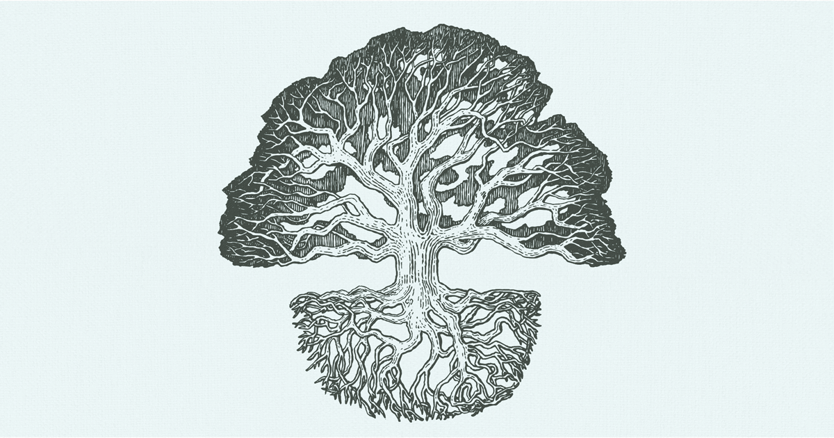 A large oak tree above ground, with the root structure visible below ground