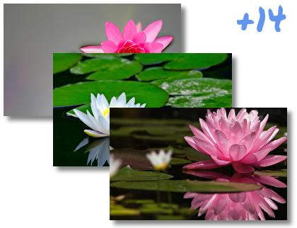 Water Lily theme pack