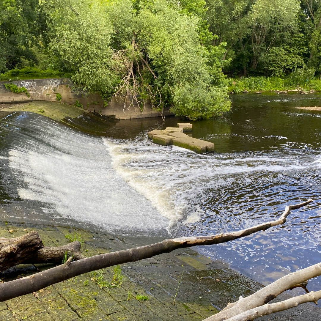 Kirkstall Valley Nature Reserve River Aire Weir