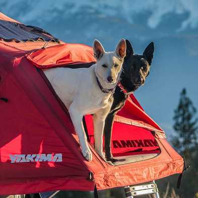 Car Camping vs. Backpacking with Your Dog