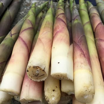 Negamari-take bamboo shoots from the Naeba Ski Area