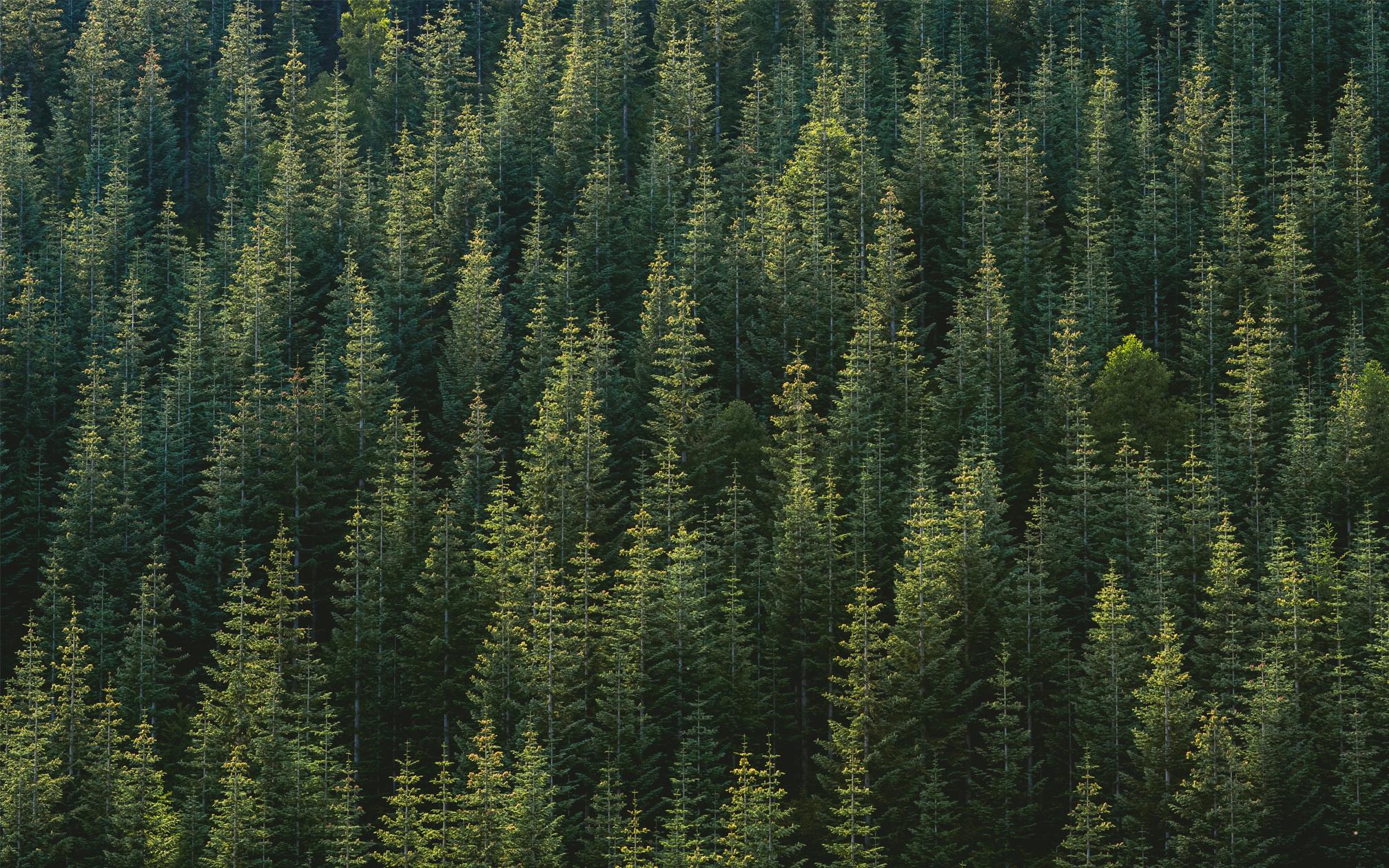 Trees 2016x1260