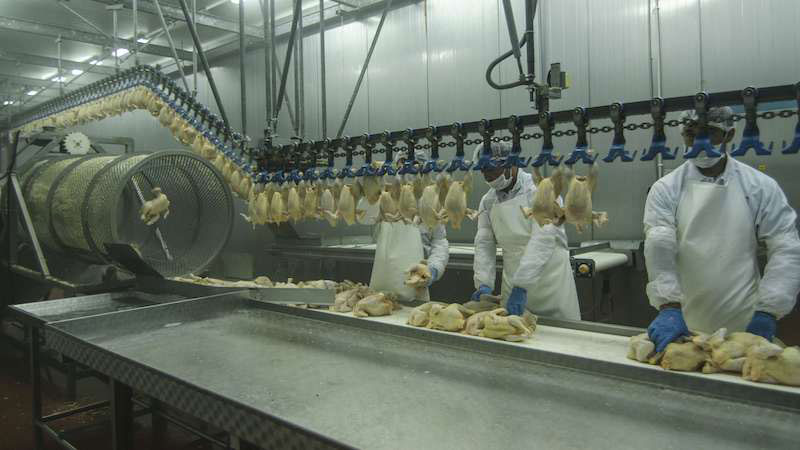 The Retail, Wholesale and Department Store Union is slamming the poultry industry for its slow reaction to COVID-19.