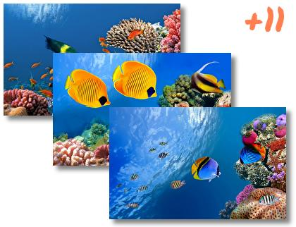 Coral theme pack
