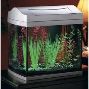 Hiding Places for Your Desktop Aquarium Fish
