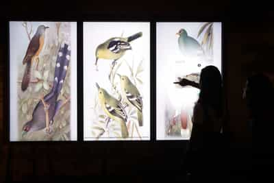 Three tall multimedia screens are showing illustration of birds. A person is touching the rightmost screen.
