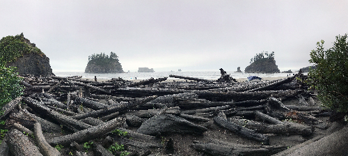 Piles of drift wood at La Push beach, with rock formations in the foggy sea