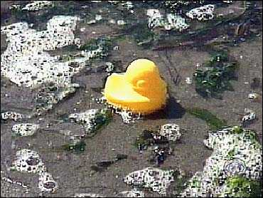 Kačička vyplavená na pláži