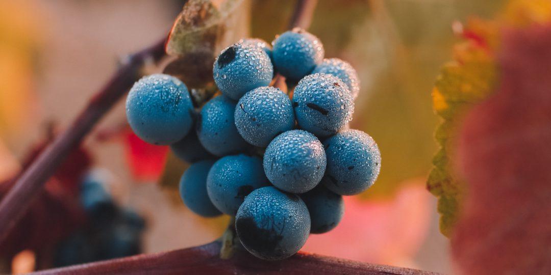 100% estate grown fruit