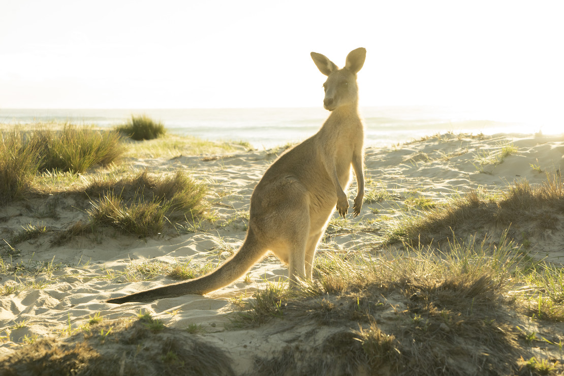 Yes, they go on the beach (credit: Destination NSW)