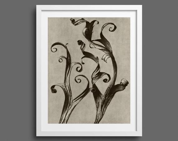 Delphinium Larkspur – Plate 45