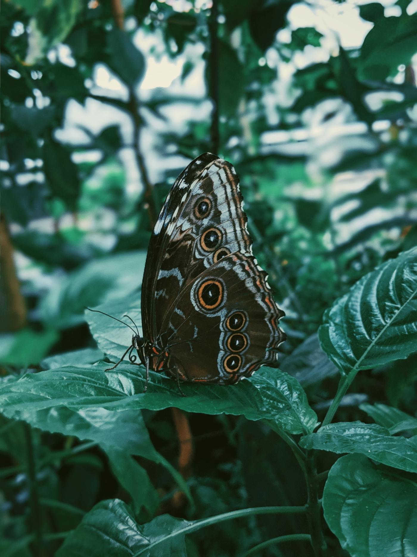 Butterfly house 3