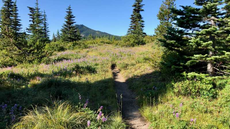 The PCT climbs a short rise as it heads south to Sawtooth Mountain