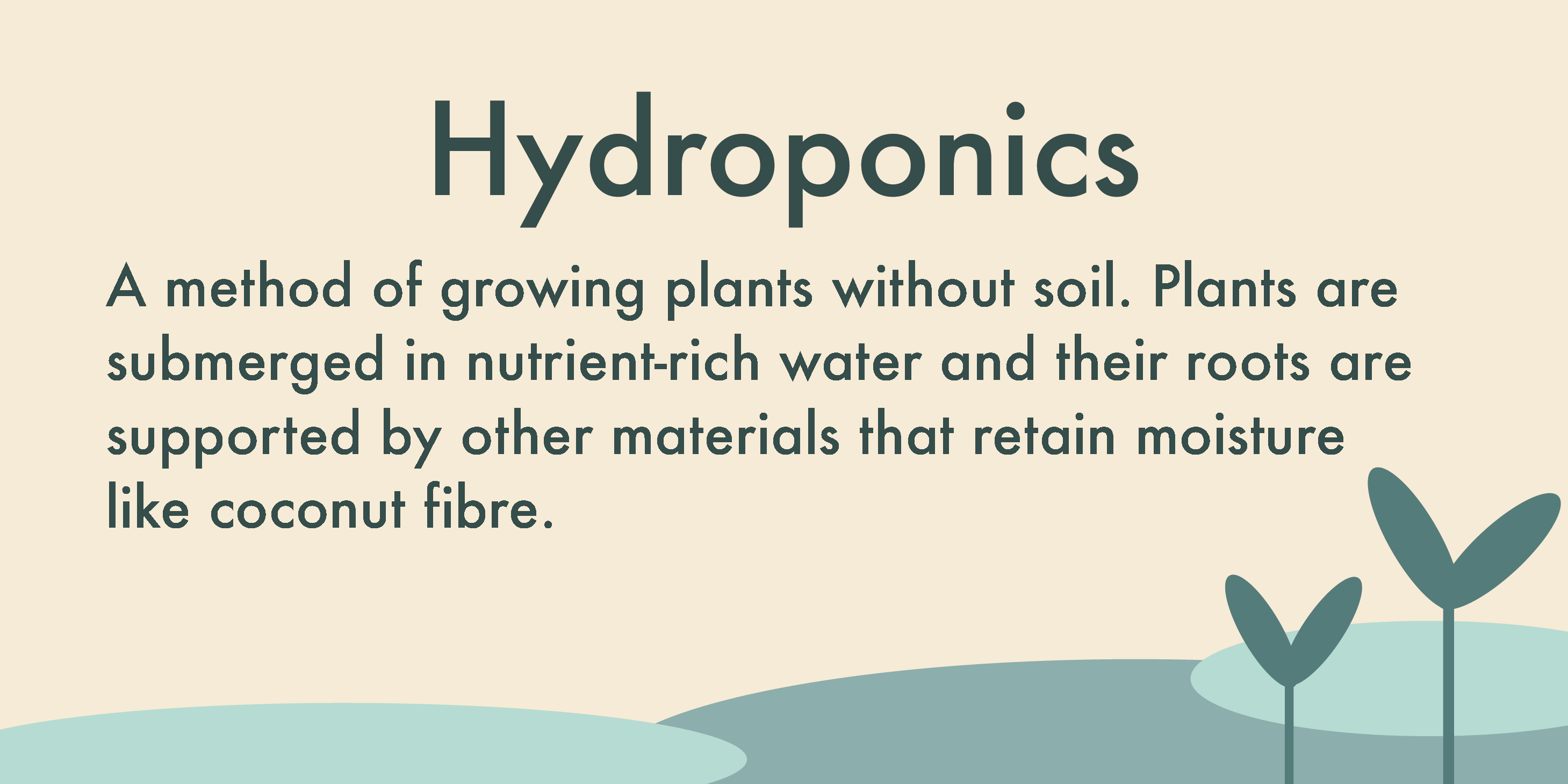 Hydroponics are a method of growing plants without soil. Plants are submerged in nutrient-rich water and their roots are supported by other materials that retain moisture, like coconut fibre.