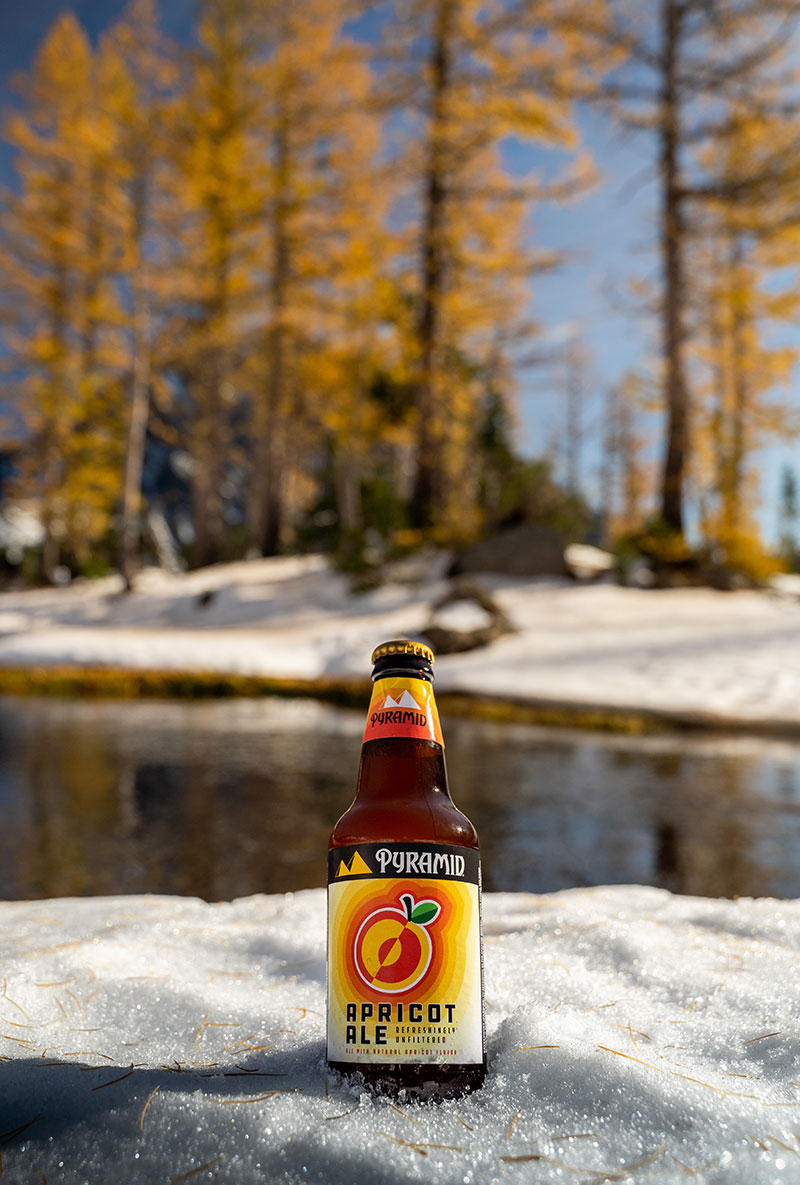 Pyramid Apricot Ale craft beer in the snow with larch trees