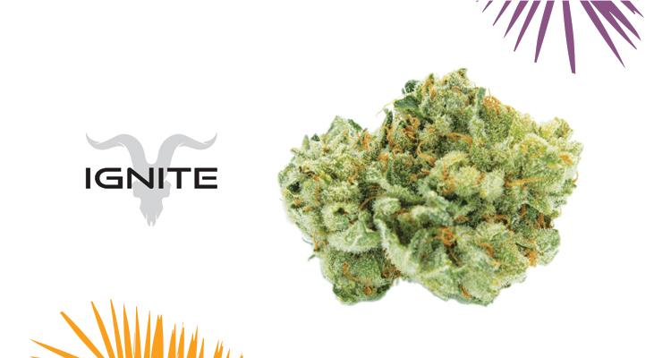 Ignite – GG#4 Strain