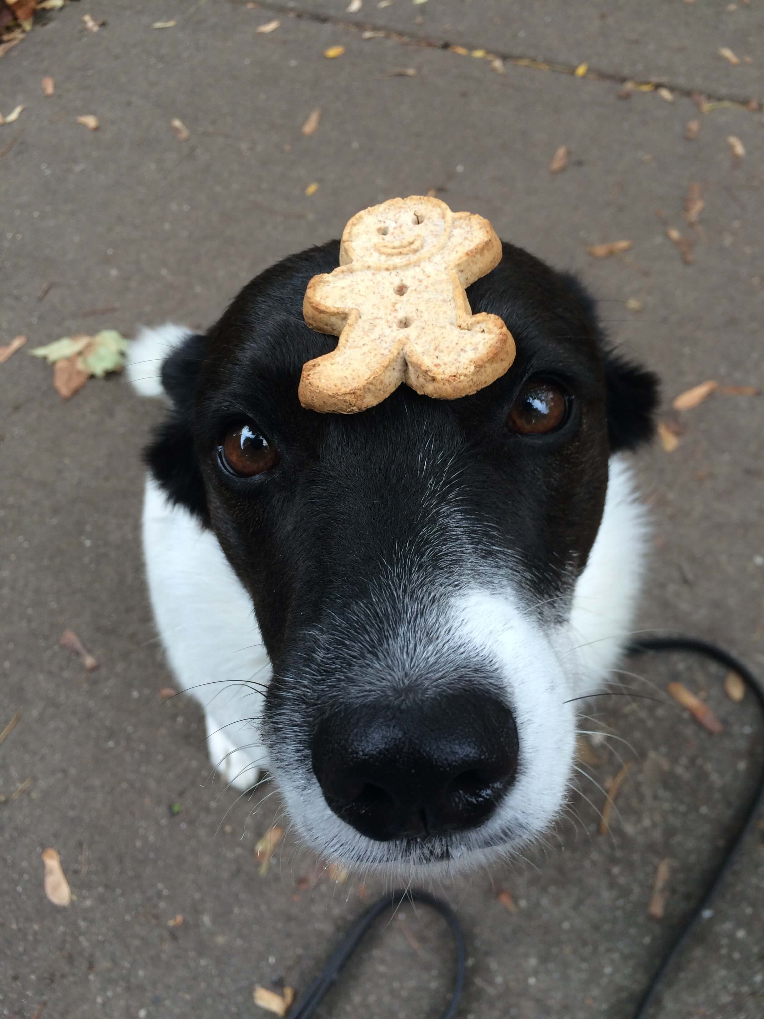 dog training treat