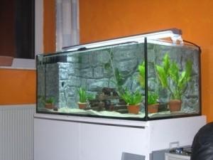 The Choice of the Aquarium